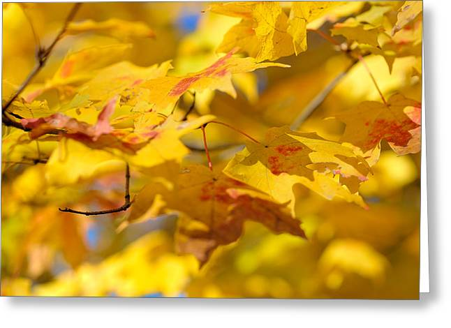Autumn Leaf Greeting Cards - Fall Colors Greeting Card by Sebastian Musial