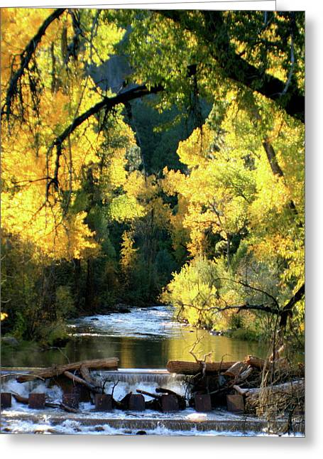 Yellow Leaves Greeting Cards - Fall Creek Greeting Card by Angie Wingerd