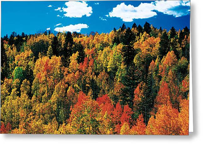 Durango Greeting Cards - Fall Durango Co Usa Greeting Card by Panoramic Images