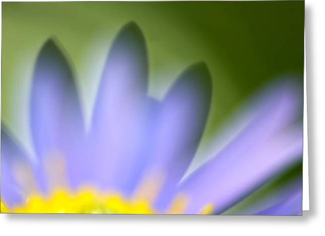 Fall Flower Greeting Card by Silke Magino