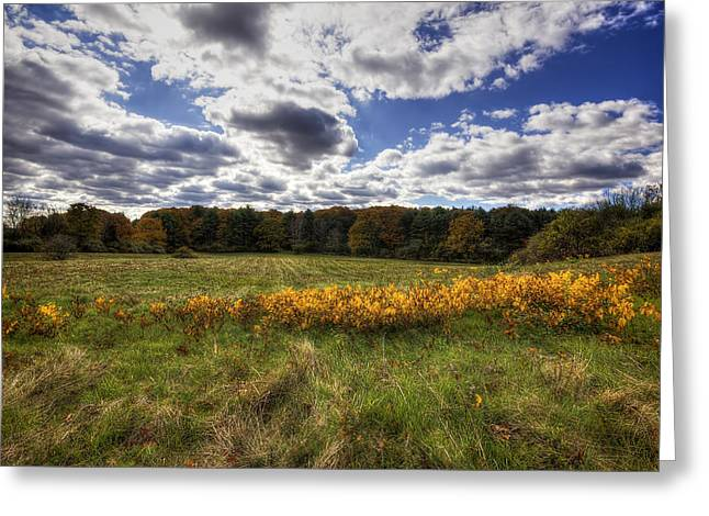 New Hampshire Leaves Greeting Cards - Fall Foliage Greeting Card by Eric Gendron