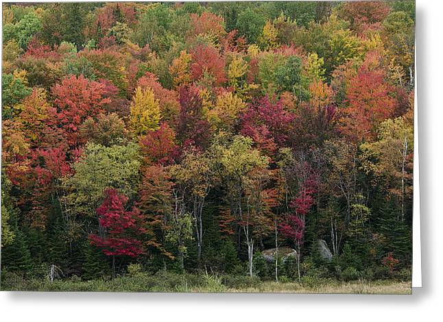 Fall Foliage in the Adirondack Mountains - New York Greeting Card by Brendan Reals