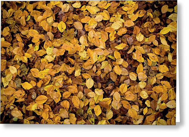 Fall Foliage Nature Pattern Greeting Card by Frank Tschakert