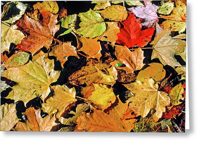 Fall Foliage On Water Greeting Card by Morris Finkelstein