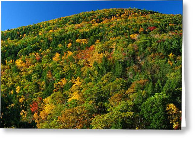 Fall Foliage Photography Greeting Card by Juergen Roth