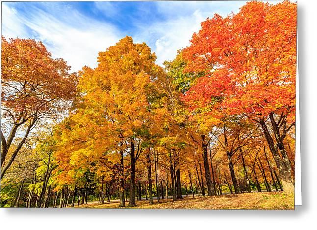 Fall Foliage Pyrography Greeting Cards - Fall Foliage  Greeting Card by Satoshi Kina