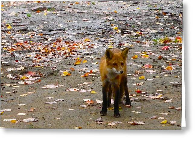 Claire Bull Greeting Cards - Fall Fox Greeting Card by Claire Bull