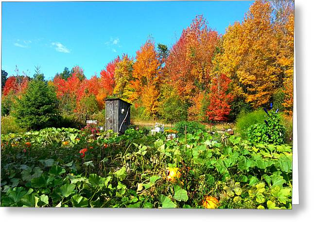 Fall Trees Greeting Cards - Fall Garden Greeting Card by Brook Burling