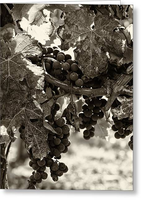 Grape Vines Greeting Cards - Fall Grapes - Toned Greeting Card by Nomad Art And  Design