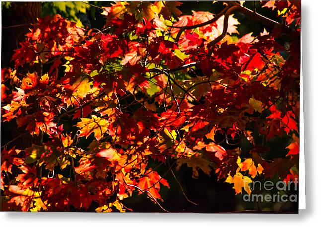Gold Leave Greeting Cards -      Fall in New England Greeting Card by Joan Kaplan