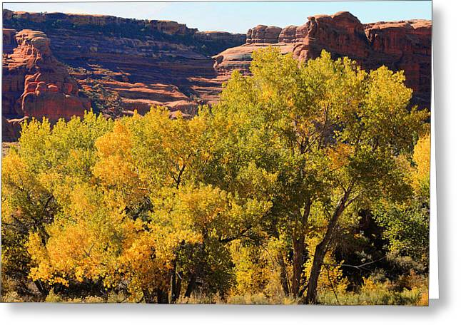 Fall In The Arches Greeting Card by Lawrence Christopher