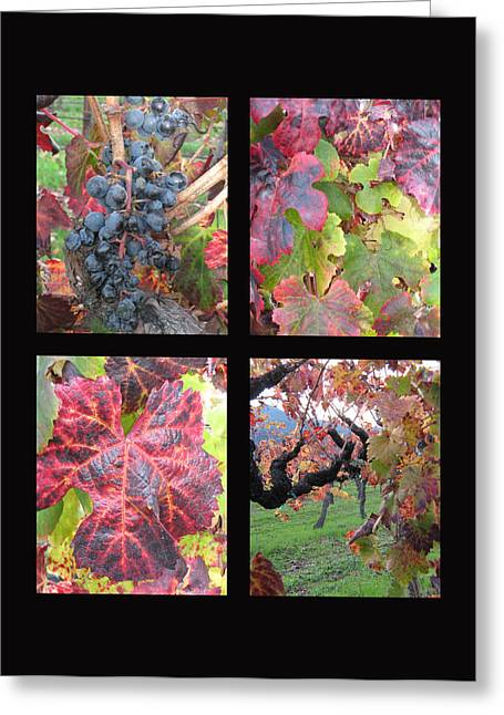 Purple Grapes Greeting Cards - Fall in the vineyards Greeting Card by Kim Pascu