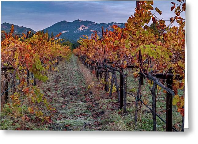 Fall In Wine Country Greeting Card by Bill Gallagher