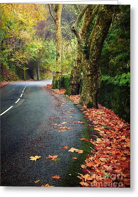 Fall Landscape Greeting Card by Carlos Caetano