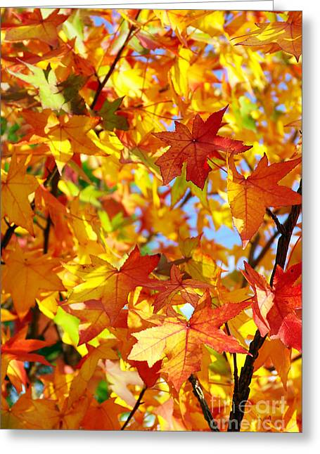 Red Wallpaper Greeting Cards - Fall Leaves Background Greeting Card by Carlos Caetano