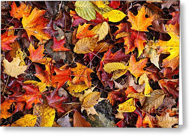 September Greeting Cards - Fall leaves background Greeting Card by Elena Elisseeva