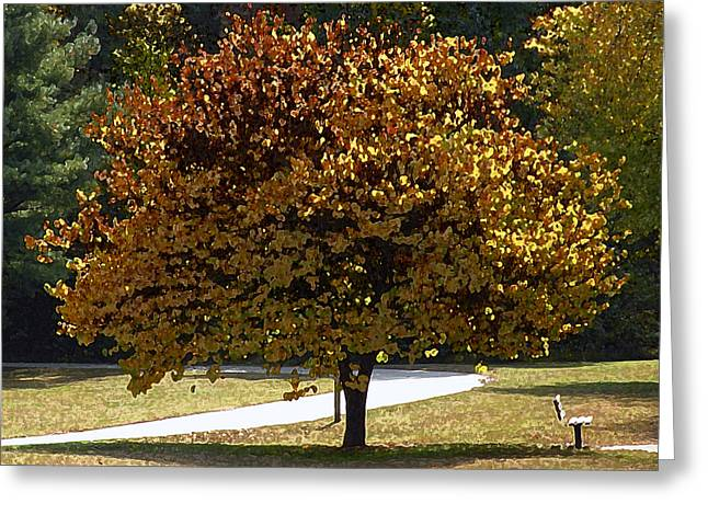 Fall Leaves Greeting Card by Steven  Michael