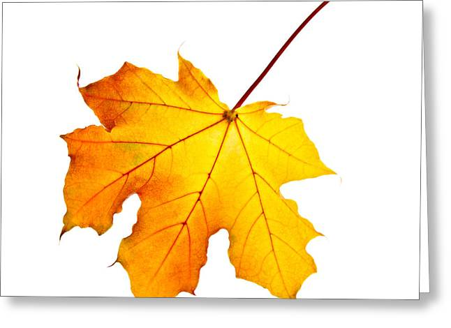 Yellow Autumn Greeting Cards - Fall maple leaf Greeting Card by Elena Elisseeva