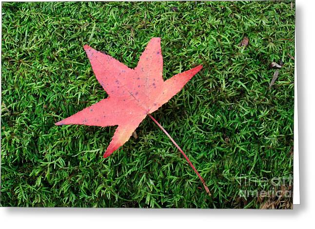 Morgan Hill Greeting Cards - Fall Maple on Moss Greeting Card by Morgan Hill