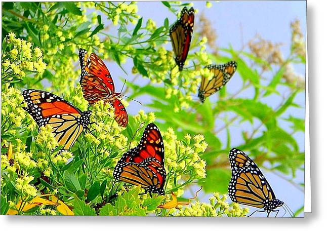 Monarch Butterfly Greeting Cards - Fall Migration Greeting Card by Lisa Scott