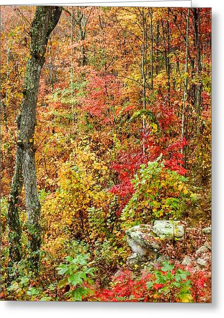 Fall On Signal Mountain # 1 Greeting Card by Tom and Pat Cory