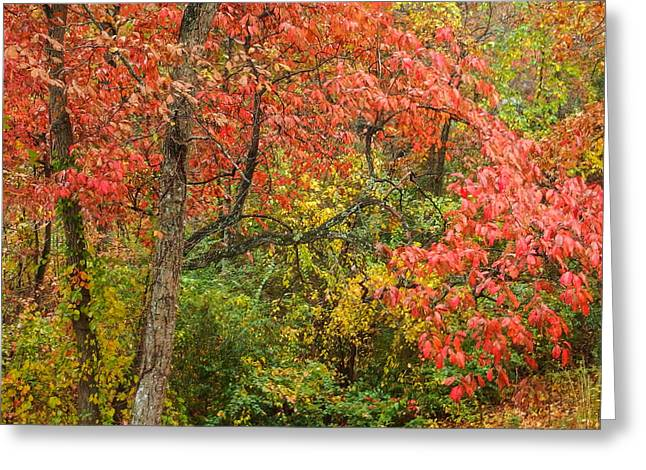 Fall On Signal Mountain # 2 Greeting Card by Tom and Pat Cory