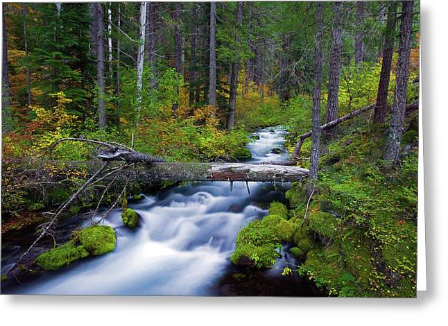 Roaring Falls Greeting Cards - Fall on the Roaring River Greeting Card by Randall Ingalls