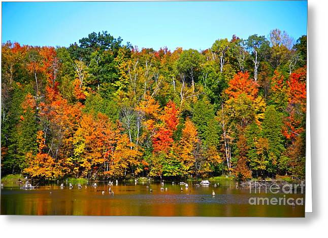 Blue Green Water Mixed Media Greeting Cards - Fall on the water Greeting Card by Robert Pearson