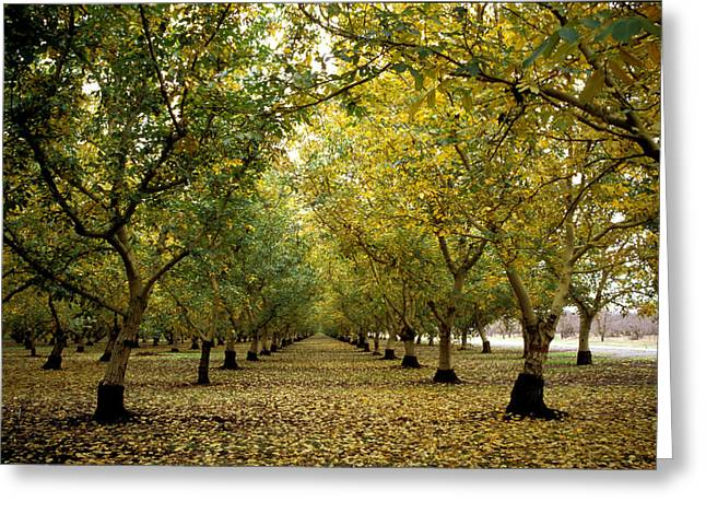 Featured Art Greeting Cards - Fall Orchard Greeting Card by Kathy Yates