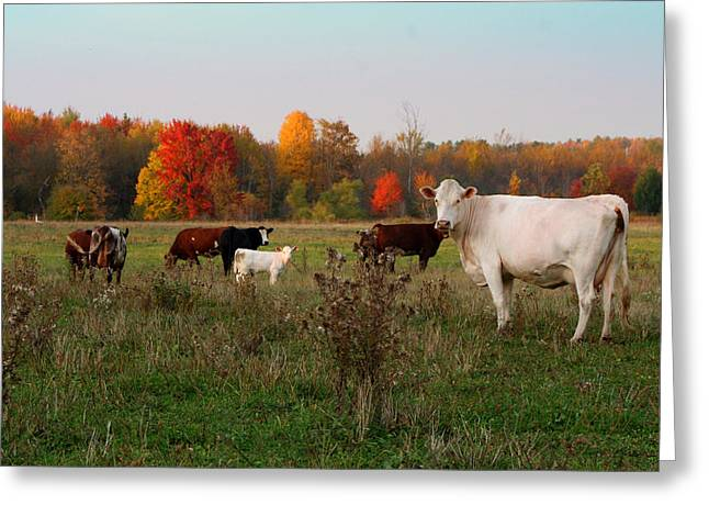 Fall Trees Greeting Cards - Fall Pasture Greeting Card by Brook Burling