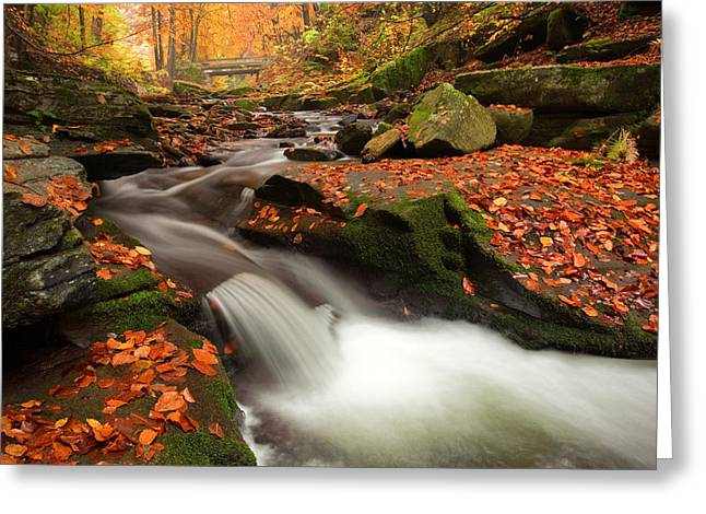 Rapids Photographs Greeting Cards - Fall Power Greeting Card by Evgeni Dinev