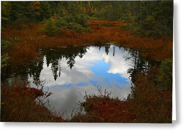 Fall Trees Greeting Cards - Fall Reflection Greeting Card by Brook Burling