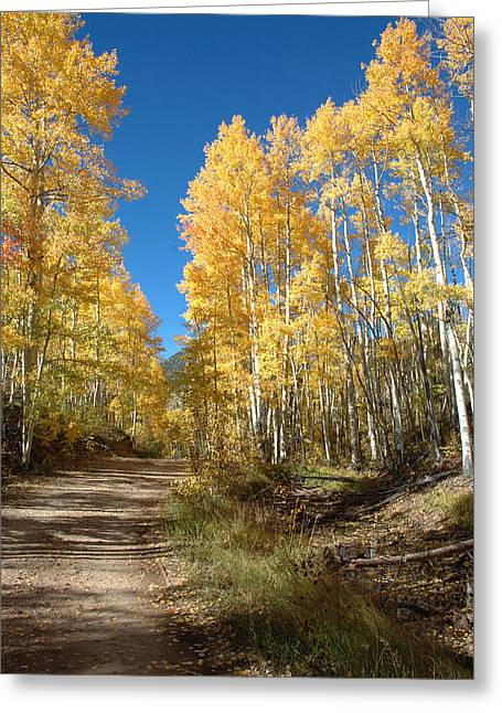 Jerry West Greeting Cards - Fall Road Greeting Card by Jerry McElroy