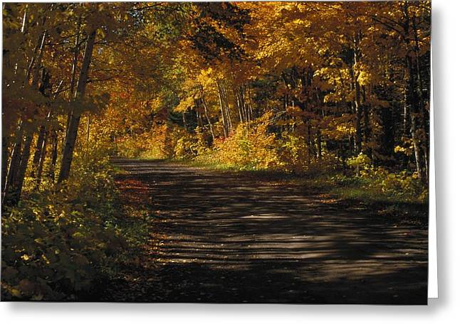 Beauty Greeting Cards - Fall Scene Of A Tree-shaded Road Greeting Card by Gillham Studios