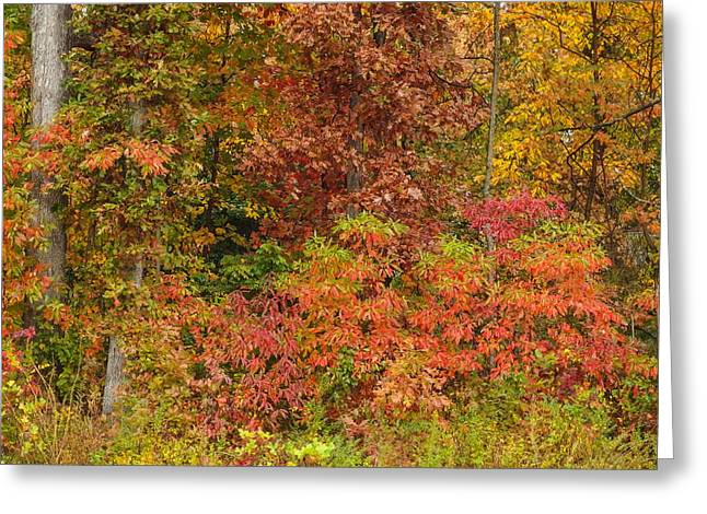 Fall Signal Mountain # 3 Greeting Card by Tom and Pat Cory