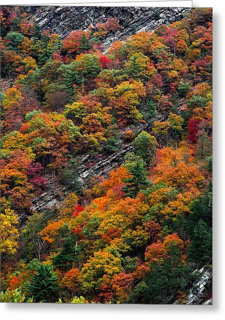 Fall Strata Greeting Card by Steven Maxx