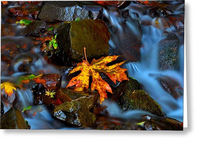 Fall Colors Greeting Cards - Fall Stream 2 Greeting Card by Noah Cole