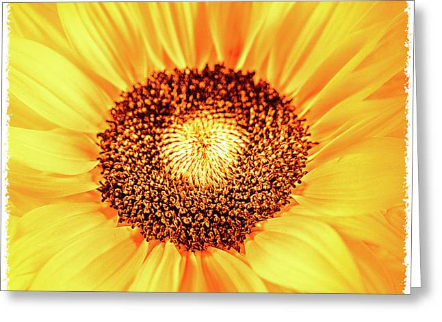 Fall Sunflower Greeting Card by Mona Stut