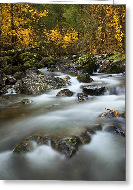 Moss Greeting Cards - Fall Surge Greeting Card by Mike  Dawson