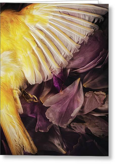 Fallen Greeting Card by Amy Weiss