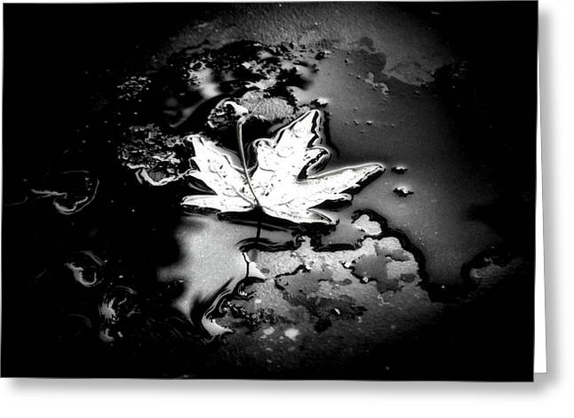 Puddle Greeting Cards - Fallen Greeting Card by Karen M Scovill