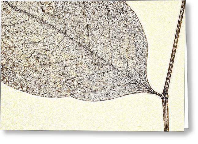 Greeting Cards - Fallen Leaf One of Two Greeting Card by Carol Leigh
