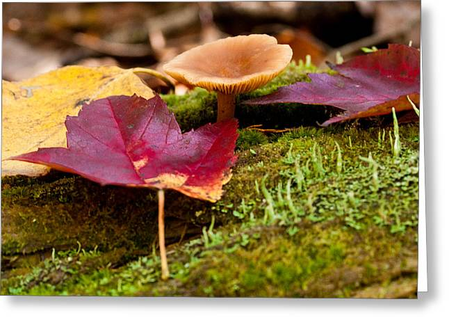 Brent L Ander Greeting Cards - Fallen Leaves and Mushrooms Greeting Card by Brent L Ander