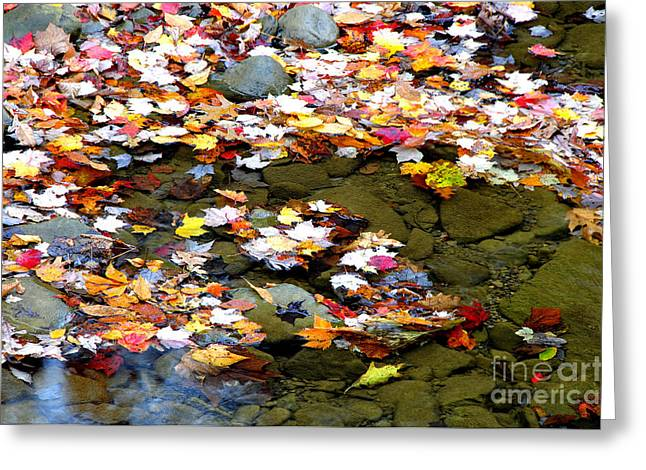 Allegheny Greeting Cards - Fallen Leaves Birch River Greeting Card by Thomas R Fletcher