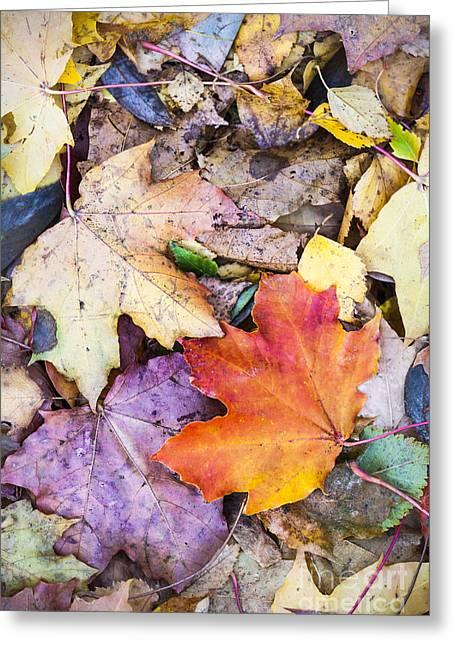 Fallen Leaves Greeting Card by Lasse Ansaharju
