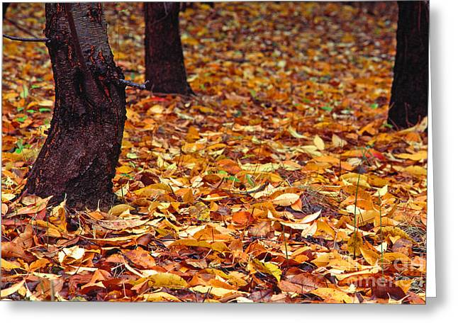 Stafford Greeting Cards - Fallen Leaves Greeting Card by Thomas R Fletcher