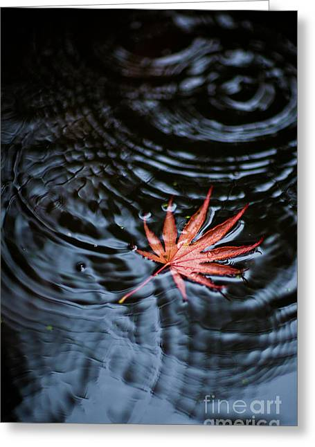 Fallen Red Greeting Card by Mike Reid