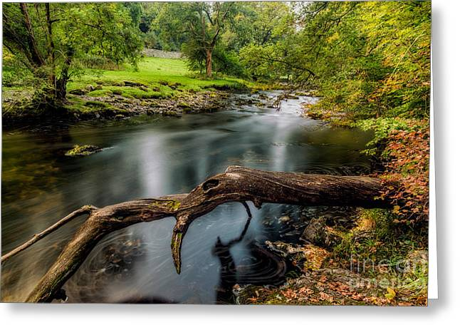 Fallen Tree Greeting Card by Adrian Evans