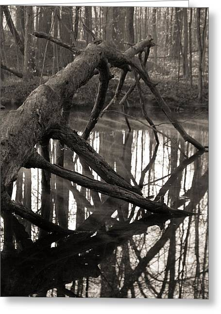 The Swamp Greeting Cards - Fallen Tree In The Forest Greeting Card by Dan Sproul