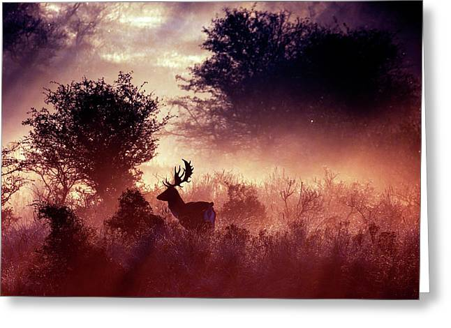 Fallow Deer In Fairytale World Greeting Card by Roeselien Raimond
